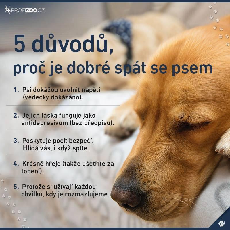 5 dôvodov, prečo je dobré spať so psom