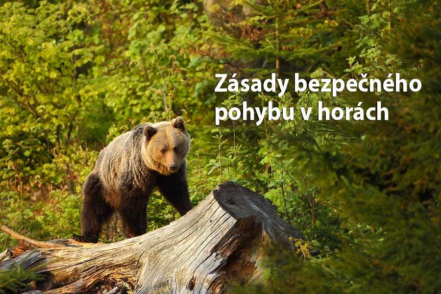 Zásady bezpečného pohybu v horách a pri styku s medveďom