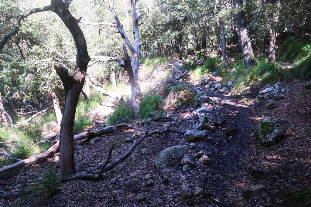 100km Mallorca trails Massanela