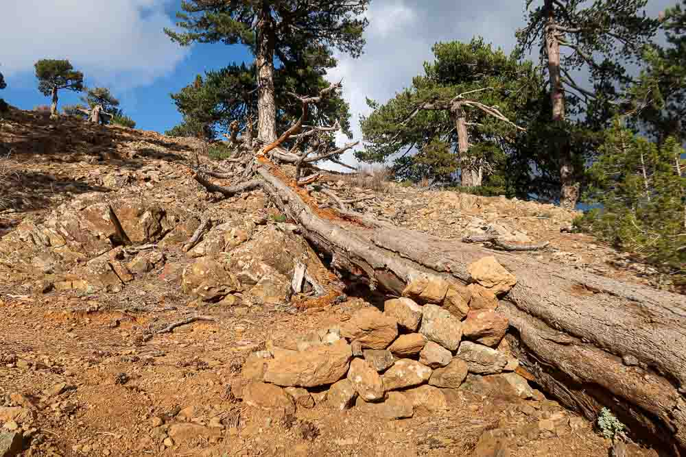 100km Cyprus trail: Troodos na streche Cypru
