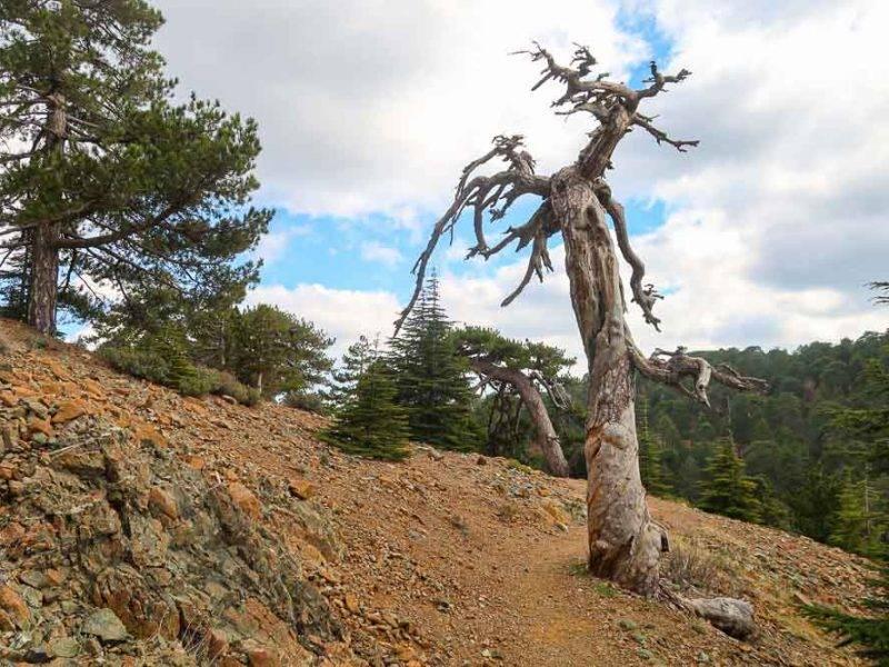 100km Cyprus trails: Paphos forrest