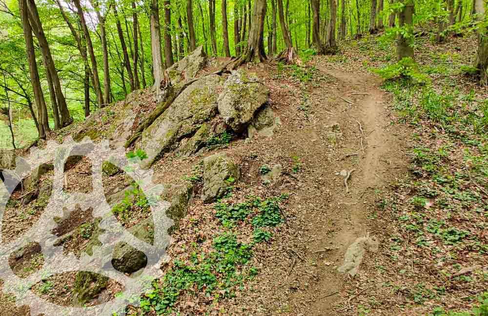 MTB po Malokarpatských singletrailoch: Trail Biely Kríž