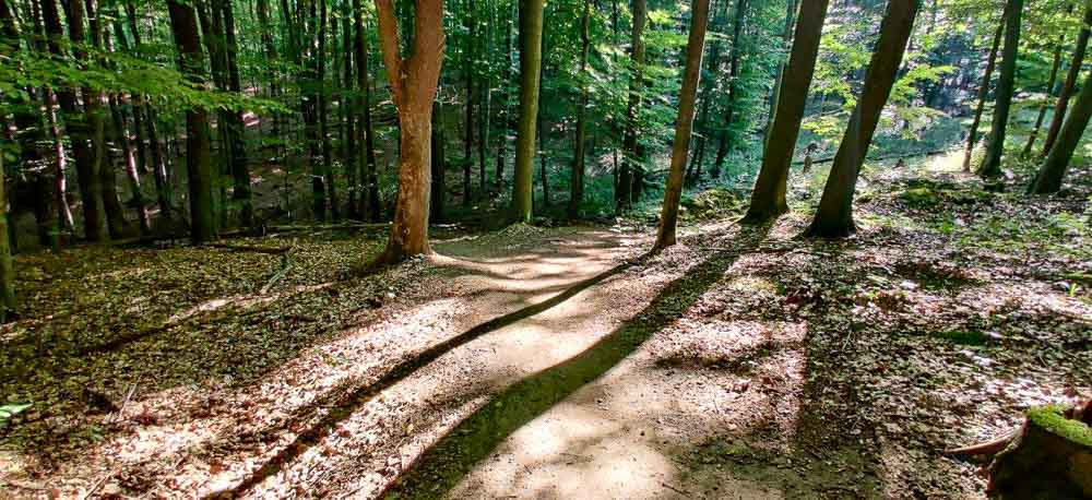 Single track Svatý vrch